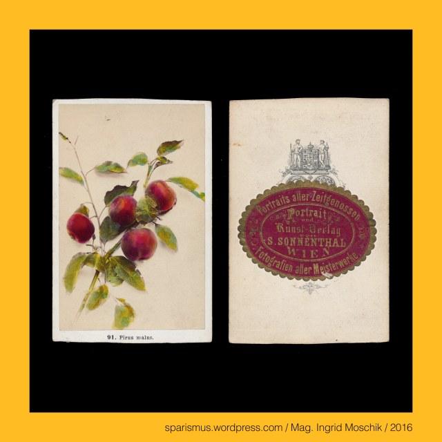 F. Fridrich, Frantisek Fridrich (1829 Menik – 1892 Prague Praha Prag) – Czech photographer and publisher, F. Fridrich - Prag – Michaelsgasse Nr. 438-I., F. Fridrich - Praha – Michalska Nr. 438-I., Apfelbaum = Pirus malus L. = Malus communis Lam., Apfelbaum = (englisch) apple-tree = (französisch) pommier = (tschechisch) Jablona obecna, The Austrian Federal Chancellery, Bundeskanzleramt Österreich, BKA, Ballhausplatz 2, Sparismus, Sparen ist muss,  Sparism, sparing is must Art goes politics, Zensurismus, Zensur muss sein, Censorship is must, Mag. Ingrid Moschik, Mündelkünstlerin, ward artist, Staatsmündelkünstlerin, political ward artist, Österreichische Staatsmündelkünstlerin, Austrian political ward artist