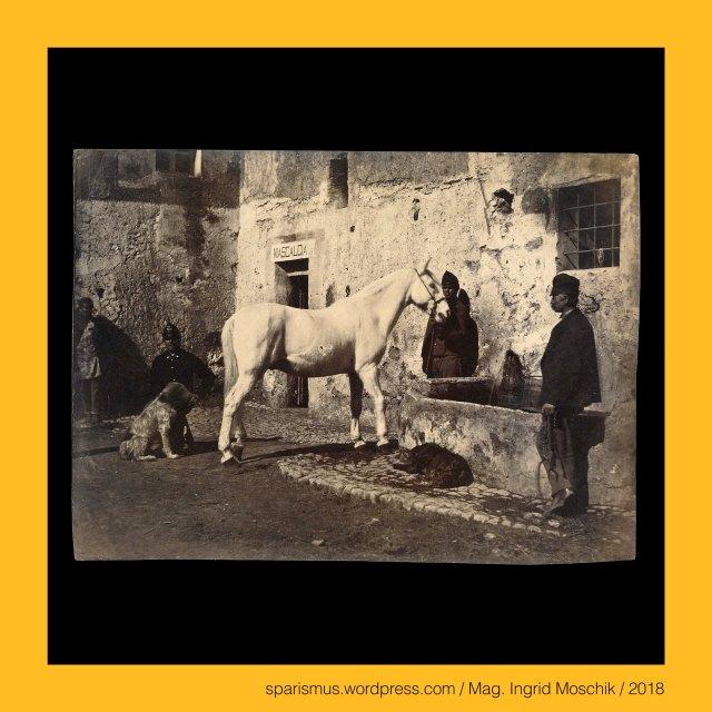 "Giacomo Caneva (1813 Padova – 1865 Roma) – Maler und Fotograf in Rom und Süditalien von circa 1845 bis 1865, Giacomo Caneva circle – painter and photographer at Rome (circa 1850 bis 1865), Giacomo-Caneva-Umkreis – Maler-Fotograf in Rom der 1850-60er, Giocomo Caneva e la scuola fotografica romana 1847 a 1855 a 1865, Roma – Via Condotti - Caffe Greco (1760 bis heute) – Künstlertreff in der Nähe der Spanischen Treppe, maniscalco - mascalcia - ferratura del calvallo = farriery (Br.) = blacksmith (Am.) =  Schmied - Hufschmied – Hufschmiedearbeit - Hufbeschlag, mascalcia – Deriva dalla contrazione di Maniscalcia sive Mariscalcia sive Maliscalcia - Discende dall'antico tedesco MARAH = cavallo e SCALC = servo sive ministro, mascalcia – mariscalcia ""Pferdeknecht"" - ahd. marah ""Mähre Pferd cavallo horse"" + ahd. scalc ""Schalk Knecht servant menial"", Mag. Ingrid Moschik (*1955 Villach - ) – Spurensicherung ""IM NAMEN DER REPUBLIK"" Österreich, Dr. Timm Starl (*1939 Wien - ) - österreichischer Kulturwissenschaftler Fotohistoriker Ausstellungskurator FOTOGESCHICHTE-Gründer"