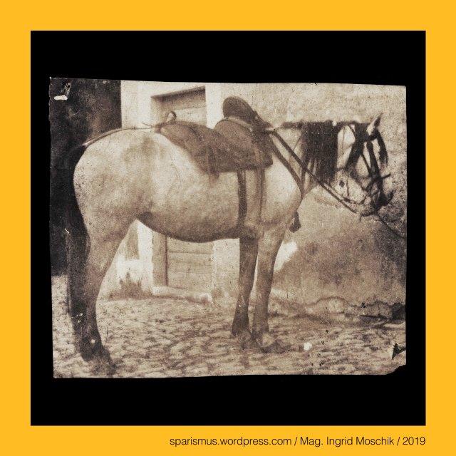 """Giacomo Caneva (1813 Padova – 1865 Roma) – Maler und Fotograf in Rom und Süditalien von circa 1845 bis 1865, Giacomo Caneva circle – painter and photographer at Rome (circa 1850 bis 1865), Giacomo-Caneva-Umkreis – Maler-Fotograf in Rom der 1850-60er, Giocomo Caneva e la scuola fotografica romana 1847 a 1855 a 1865, Roma – Via Condotti - Caffe Greco (1760 bis heute) – Künstlertreff in der Nähe der Spanischen Treppe, Falbe = dun gene horse = grullo = cheval gene dun = cavallo falbo, Falbe – Mausfalbe, Brauner = braunes Pferd – rotbraunes Pferd – kastanien-braunes Pferd, Brauner = braunes Pferd = bay horse = cavallo baio = cheval bai – Latin badius """"chestnut-brown - reddish-brown"""" – PIE *badyo- """"yellow - brown"""", geschundene Mähre = Schindmähre = Klepper = Gaul =  battered mare = cavalla malconcia = jument battue, Mähre = mare = mareshal = maniscaclo – mariscalco - marhskalk - Latin mariscalcus – Etymology 1 Old-High-German meriha – Proto-Germanic *marhijo – Proto-Celtic *markos - PIE *markos """"horse Pferd"""", Langhaar-Pferd = Langhaar = mane horse = criniera = cavallo con una lunga ciniera, Pferdefuhrwerk = Fuhrwerk mit weissem Pferd = Pferdefuhrwerk = Fuhrwerk mit Schimmel = carro con cavallo bianco = white horse and cart, Hengst = stallone = stallion = stud = etalon, Stute = Mähre = cavalla = mare = jument, Fohlen = Füllen = Jungpferd = cavallino = puledro = foal = poulain, Schimmel = weisses Pferd = white horse = cheval blanc = cavallo bianco, Lipizzaner = Karster = Lipizzano = Lipizzan = Lipicanec = Lipican = Lipicai, maniscalco - mascalcia - ferratura del calvallo = farriery (Br.) = blacksmith (Am.) =  Schmied - Hufschmied – Hufschmiedearbeit - Hufbeschlag, mascalcia – Deriva dalla contrazione di Maniscalcia sive Mariscalcia sive Maliscalcia - Discende dall'antico tedesco MARAH = cavallo e SCALC = servo sive ministro, mascalcia – mariscalcia """"Pferdeknecht"""" - ahd. marah """"Mähre Pferd cavallo horse"""" + ahd. scalc """"Schalk Knecht servant menial"""", Mag. Ingrid Moschik (*1955"""